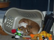 takes the toys out so he can play in it