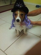 Annie's Halloween costume! (she did not like this) =P