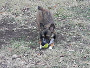 playing ball while play bowing