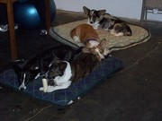 Our_pack_at_rest_0111