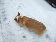 sniffin some snow