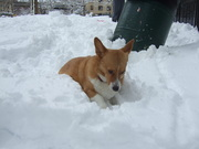 digging through snow