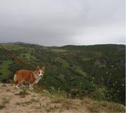 Hill Overlook