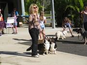 Aussie RSPCA Million Paws Walk
