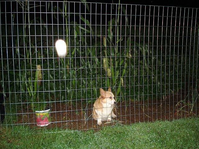 Caught in the garden one night