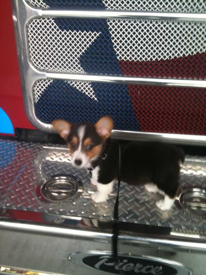Ernie on the fire truck