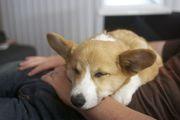 bento_napping