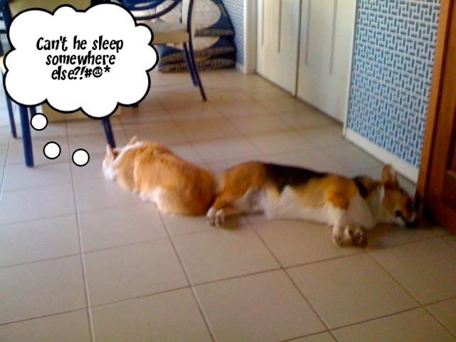 Can't He Sleep Somewhere Else?!#@*