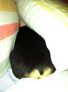 Lolly Hiding