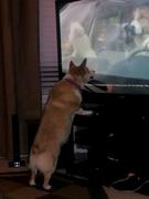 Abbie watching tv