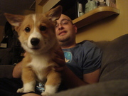 Puppy Karma with Dave