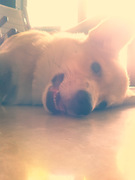 i know its 11am but im still sleepy mommy~