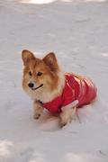 Zion's 1st snow trip