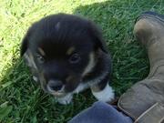 Cute Curley 4.5 weeks
