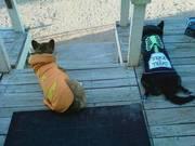 Doggys!