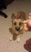 It's peanutbutter, a dogs favorite.