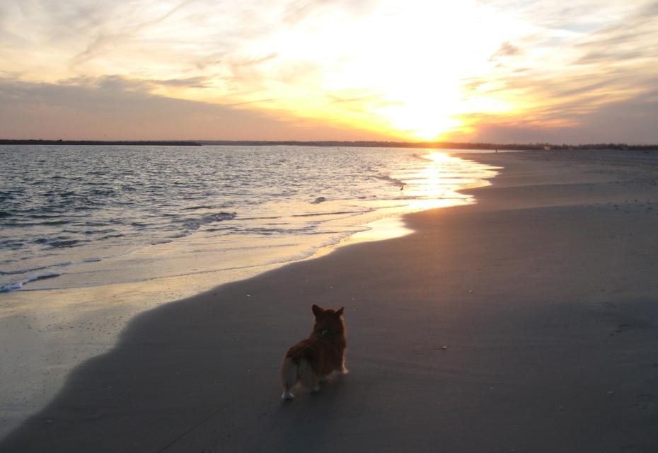 Trixie on the beach