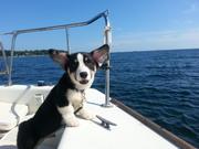 Nemo's First Sail