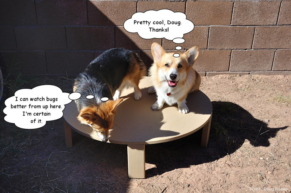 Corgis of the Round Table