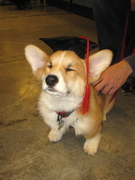 Casey graduated puppy class!