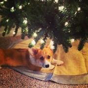 Hanging out under the Christmas tree