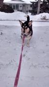Snow hopping