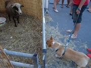 Fortie vs Ewe