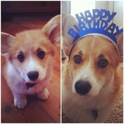 Casey turned 1