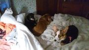 Monty, Keaton, Ralph, Rosie