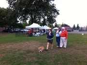 CPWCC Corgi Fun Day 2015