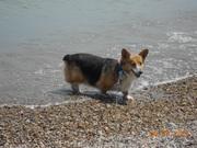 Zoey at Lake Michigan