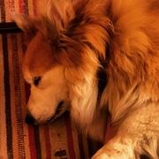 Orson snoozing