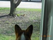 focused on the squirrel