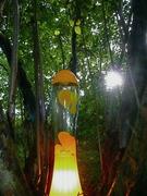 Fludium in the woods