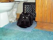 My Kitty in the 'sauna'