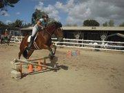 waldo and horses