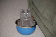 A fur bowl