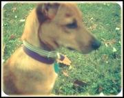 Pretty puppy :)
