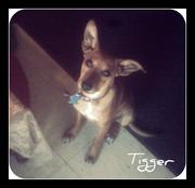 Aww Such a cutie :)