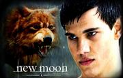 Jacob-Black-Wolf-