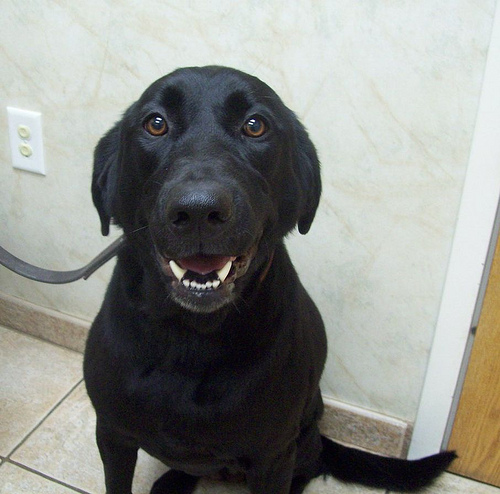 Kiah ready to go for a walk!