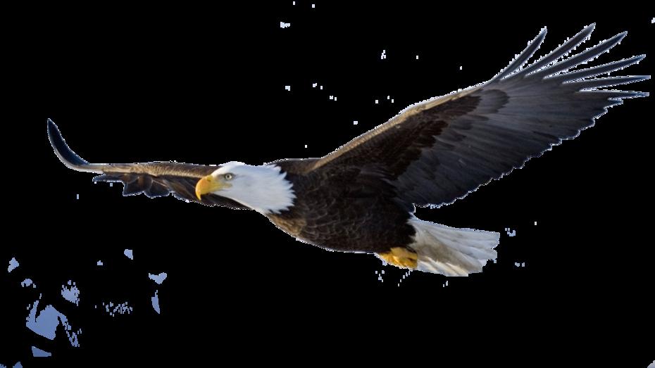 1st Choice Eagle transparent