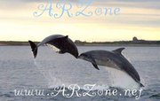 ARZone dolphins