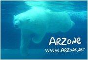ARZone PB swimming