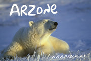 ARZone pic