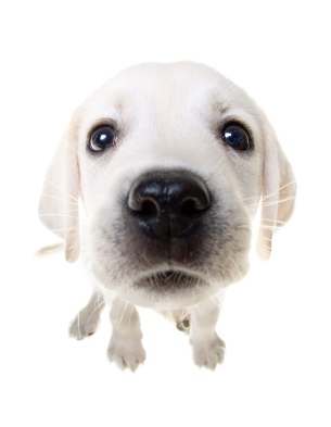 puppyxoxo