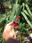 nice flower on a vine I found