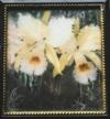 Henri Verstijnen 'Orchideeen'