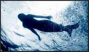 mermaid - jeff leicher - 1998 - kawaii hawaii