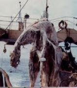 dinosaur carcass 1970s